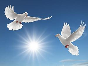 Акция к Международному Дню птиц | Ярмарка Мастеров - ручная работа, handmade