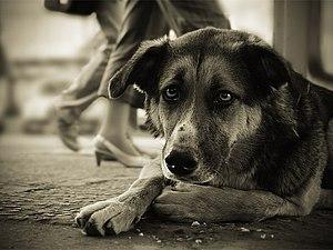 Прием работ для 6-ого благотворительного аукциона в поддержку бездомных животных | Ярмарка Мастеров - ручная работа, handmade