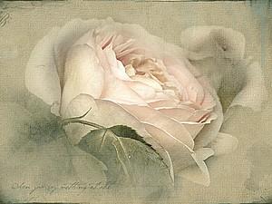 Восхищение розой | Ярмарка Мастеров - ручная работа, handmade