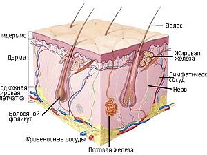 Корнеотерапия. | Ярмарка Мастеров - ручная работа, handmade