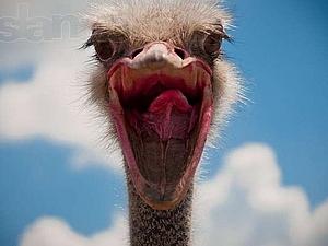 Птичку жалко! ( о страусе бедном замолвите слово) | Ярмарка Мастеров - ручная работа, handmade