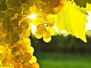 Желтый - цвет настроения!   Ярмарка Мастеров - ручная работа, handmade