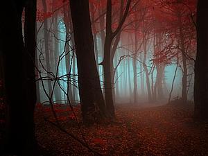 Цветные туманы Янека Седлара. Большой фоторепортаж. | Ярмарка Мастеров - ручная работа, handmade