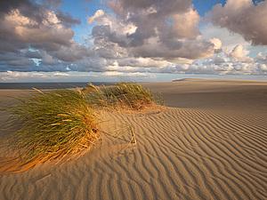 Море, сосны и песок. | Ярмарка Мастеров - ручная работа, handmade