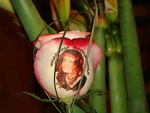 Фотография для живой розы в подарок | Ярмарка Мастеров - ручная работа, handmade