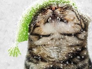 С первым днем зимы!!! | Ярмарка Мастеров - ручная работа, handmade