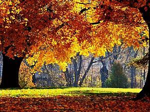 Прекрасная и долгожданная осень.. | Ярмарка Мастеров - ручная работа, handmade