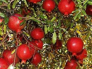 Королевский плод здоровья и красоты. Ярмарка Мастеров - ручная работа, handmade.