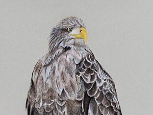 Рисуем орлана-белохвоста. Speed Painting. Ярмарка Мастеров - ручная работа, handmade.