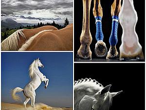 Грация прекрасных лошадей в фотопроекте Equus | Ярмарка Мастеров - ручная работа, handmade