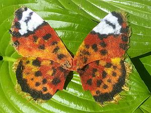 Крылья бабочки. Клеенный фетр, handmade