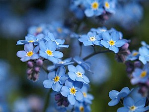 12 оттенков голубого | Ярмарка Мастеров - ручная работа, handmade