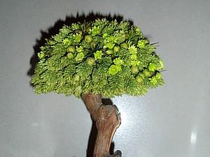 топиарий, бонсай из сухоцветов | Ярмарка Мастеров - ручная работа, handmade