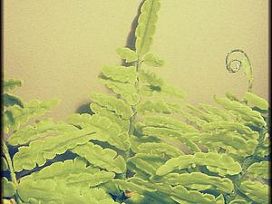 Лепим лист папоротника из полимерной глины. Ярмарка Мастеров - ручная работа, handmade.