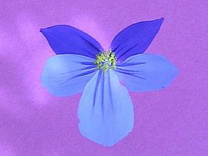 Как просто нарисовать цветок. Часть 1. Ярмарка Мастеров - ручная работа, handmade.