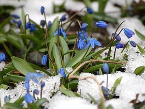 Весеннее настроение!!! рассказы о весне | Ярмарка Мастеров - ручная работа, handmade