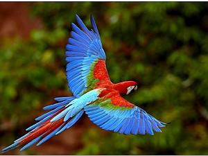 Летят перелетные птицы...   Ярмарка Мастеров - ручная работа, handmade