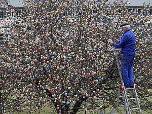 10 тысяч крашенок на пасхальном дереве: полувековая семейная традиция!   Ярмарка Мастеров - ручная работа, handmade