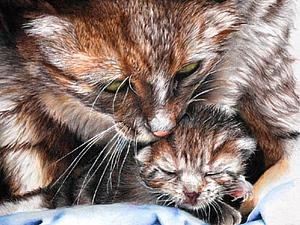 Кошки на полотнах Питера Уильямса | Ярмарка Мастеров - ручная работа, handmade