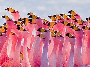 Озеро розовых фламинго | Ярмарка Мастеров - ручная работа, handmade