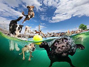 Фотограф Seth Casteel и его замечательные проекты: подводные фото собак и детей. Ярмарка Мастеров - ручная работа, handmade.
