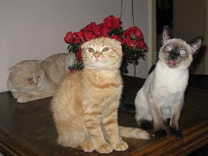 Накануне праздников  не совсем про работу,  а для хорошего настроения, или... почему именно кошки?   Ярмарка Мастеров - ручная работа, handmade