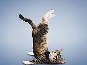 Йога для животных - очень забавно! | Ярмарка Мастеров - ручная работа, handmade