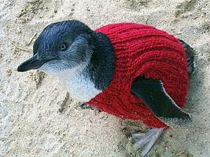 Спасительное вязание, или Как помогают пингвинам. Ярмарка Мастеров - ручная работа, handmade.