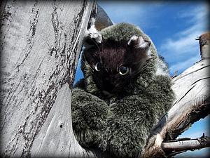 Фантазийный конь Хонс и зеленоглазый котенок Луговых трав | Ярмарка Мастеров - ручная работа, handmade
