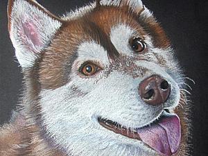 Рисуем аляскинского маламута пастелью. Ярмарка Мастеров - ручная работа, handmade.