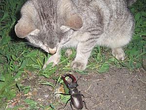 Кот и жук-олень. Кто кого?   Ярмарка Мастеров - ручная работа, handmade