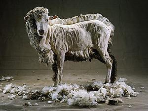 Приглашаем на пати «И овцы целы» в студии Шерсти клок 15 ноября 2014 г. | Ярмарка Мастеров - ручная работа, handmade