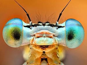 Черпаем вдохновение в природе: живописные насекомые | Ярмарка Мастеров - ручная работа, handmade