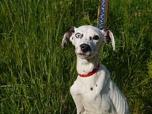Аукциона в поддержку собаки Алексы! Заходите и выбирайте лоты! | Ярмарка Мастеров - ручная работа, handmade