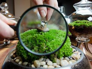 Своенравные жители флорариумов. Интересные идеи | Ярмарка Мастеров - ручная работа, handmade