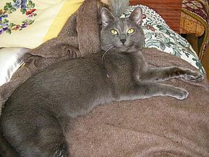 У нас пропал кот. Помогие его найти!!!! | Ярмарка Мастеров - ручная работа, handmade