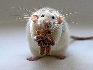 о плюше, мишках и братьях наших меньших | Ярмарка Мастеров - ручная работа, handmade
