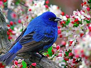 Возвращение синей птицы | Ярмарка Мастеров - ручная работа, handmade