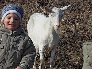 Как мы везли козу | Ярмарка Мастеров - ручная работа, handmade
