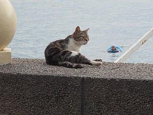 Сочинские кошки:) | Ярмарка Мастеров - ручная работа, handmade
