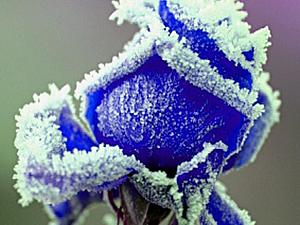Коллекция Зимняя сказка-пополнение. Шкатулка-сердце Зимняя роза. | Ярмарка Мастеров - ручная работа, handmade