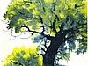 Как нарисовать дерево акварелью