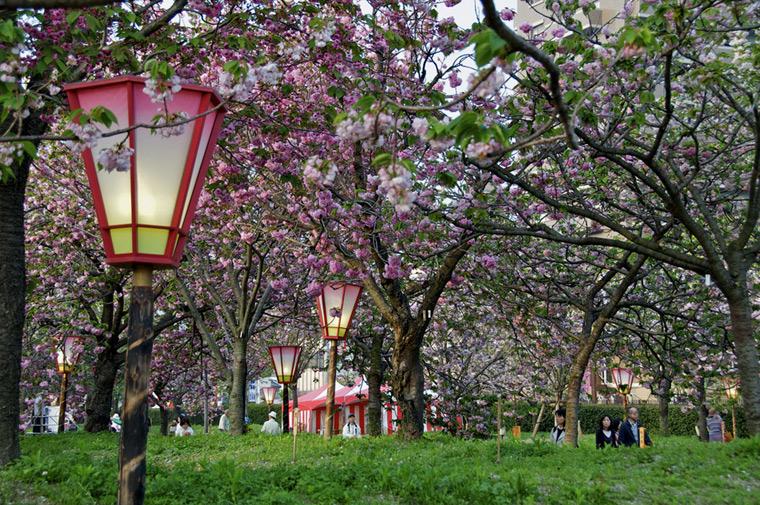 Bilo jednom jedno drvo - Page 2 Sakura21