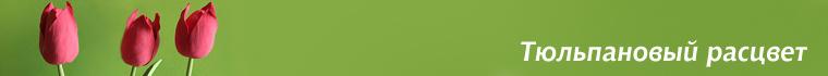 Тюльпановый расцвет