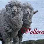 Vellera - Ярмарка Мастеров - ручная работа, handmade