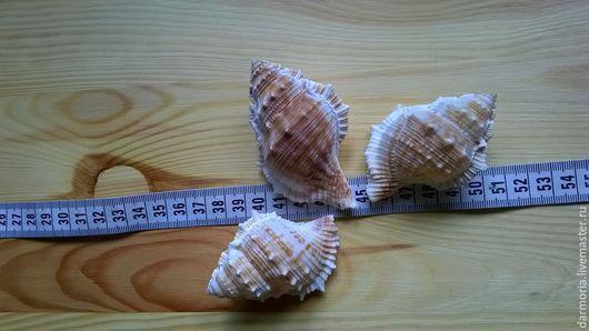 Другие виды рукоделия ручной работы. Ярмарка Мастеров - ручная работа. Купить Ракушки морские (04-010). Handmade. Бежевый