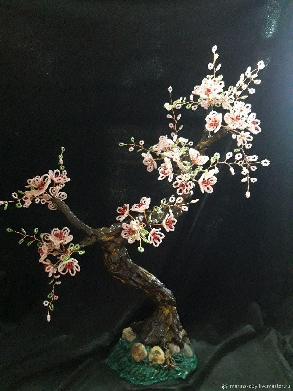 цветущая сакура, Деревья, Иваново,  Фото №1