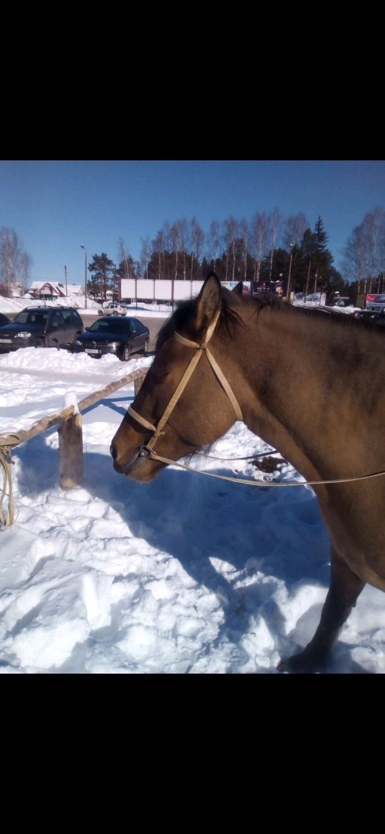 Agricultural harness bridle, with a leash, Bridles, Kirov,  Фото №1
