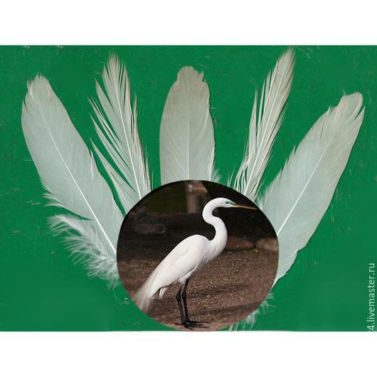 """Другие виды рукоделия ручной работы. Ярмарка Мастеров - ручная работа. Купить Перья птицы """"Белая цапля"""". Handmade. Белый"""