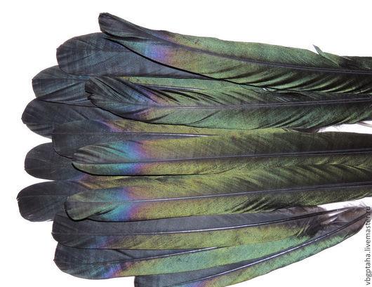 Фото сделано со вспышкой, что дополнительно усилило цветовую насыщенность окраски перьев.